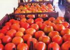 Need Homegrown Tomatoes? Look No Further Than River Road's Rome Family