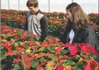 St. James FFA Poinsettia Sale